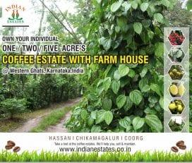 Coffee estate for sale in Sakleshpur, coorg, chikmagalur, karnataka